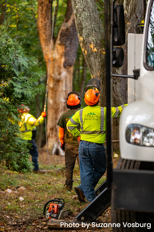 licensed arborist westchester county ny rockland county ny bergen county nj fairfield county ct