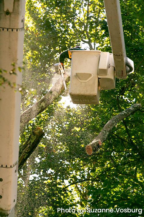 A man in a crane cutting down a tree.