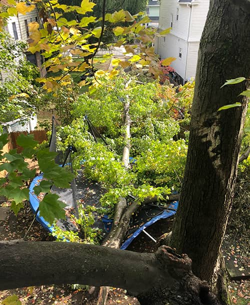 sick tree assessment westchester county ny rockland county ny bergen county nj fairfield count ct